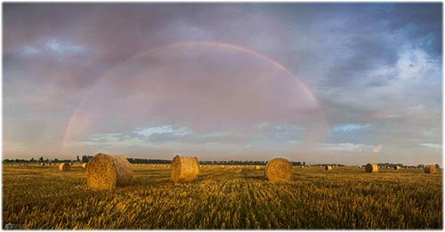 Прогноз урожаю основних сільськогосподарських  культур в Україні в 2016 році: Попередні підсумки та прогноз по пізніх культурах. Оновлення на 15 вересня 2016 р.