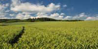 Україна і світ - ціни на зернові та олійні: Огляд тижня 25.06-29.06.2018