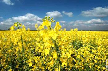 Україна і світ - ціни на зернові та олійні: Огляд тижня 02.07-06.07.2018