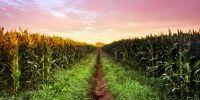 Україна і світ - ціни на зернові та олійні: Огляд тижня 09.07-13.07.2018