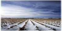 Україна і світ - ціни на зернові та олійні: Огляд тижня 19.02-23.02.2018
