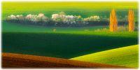 Україна і світ - ціни на зернові та олійні: огляд тижня, 18.11.2016