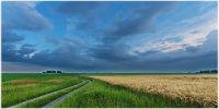 Україна і світ - ціни на зернові та олійні: огляд тижня, 11.11.2016