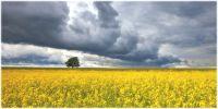 Україна і світ - ціни на зернові та олійні: Огляд тижня 02.04-06.04.2018
