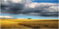 Україна і світ - ціни на зернові та олійні: Огляд тижня 18.09-22.09.2017